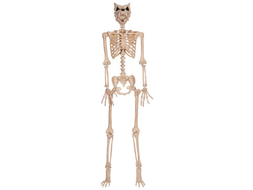 New 2017 - Skeleton Werewolf Prop. Here is a new twist on a traditional skeleton! Natural bone-colored 60-inch skeleton has a werewolf skull and posable arms and legs. The foot bones are shaped like wolf bones also! Great addition for your next haunted scene! 60 inches tall.