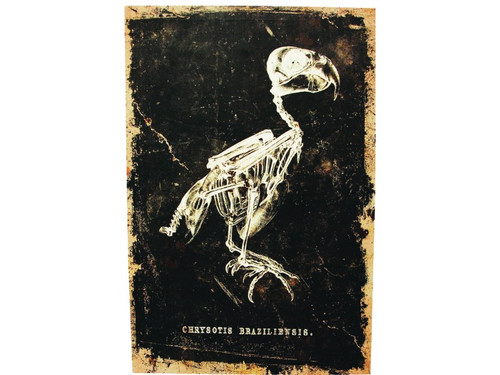 """New 2017.  You will enjoy this creepy print of a parrot with the words """"Chrysotis Braziliensis"""" or a genus of Parrot found in South America printed just below it. Destressed-look canvas print on a pressed cardboard fame. The frame has a notch in the back for easy hanging. Measures 16 inches by 24 inches and 3/4 of an inch deep.  Make your next haunted party just a touch more eerie!"""