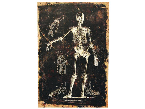 New 2017. Do you know how many bones are in the human body? You do now with this creepy looking numbered skeleton. Destressed-look canvas print on a pressed cardboard fame. The frame has a notch in the back for easy hanging. Measures 16 inches by 24 inches and 3/4 of an inch deep.