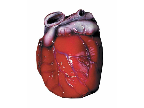 This heart prop is great as a centerpiece or by itself.  Be careful, it could still be beating! Latex, Life Size.