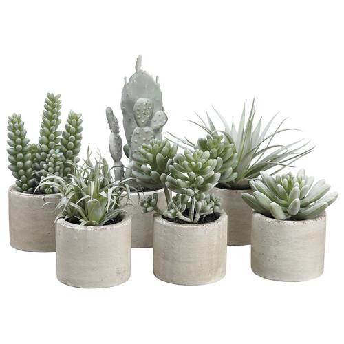 Set Of 6 Mini Succulents In Cement Pots Floral Emporium