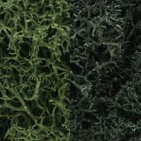 Dark Green Mix Lichen Woodland Scenics