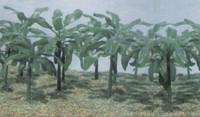 """Banana Trees (1-1/2"""" to 2-1/2"""" Tall) (15) Pegasus"""