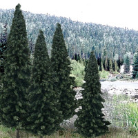 "Ready Made Trees Value Pack 4"" - 6"" Evergreen (13)"