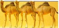 Camels (Dromedaries) HO Preiser Models