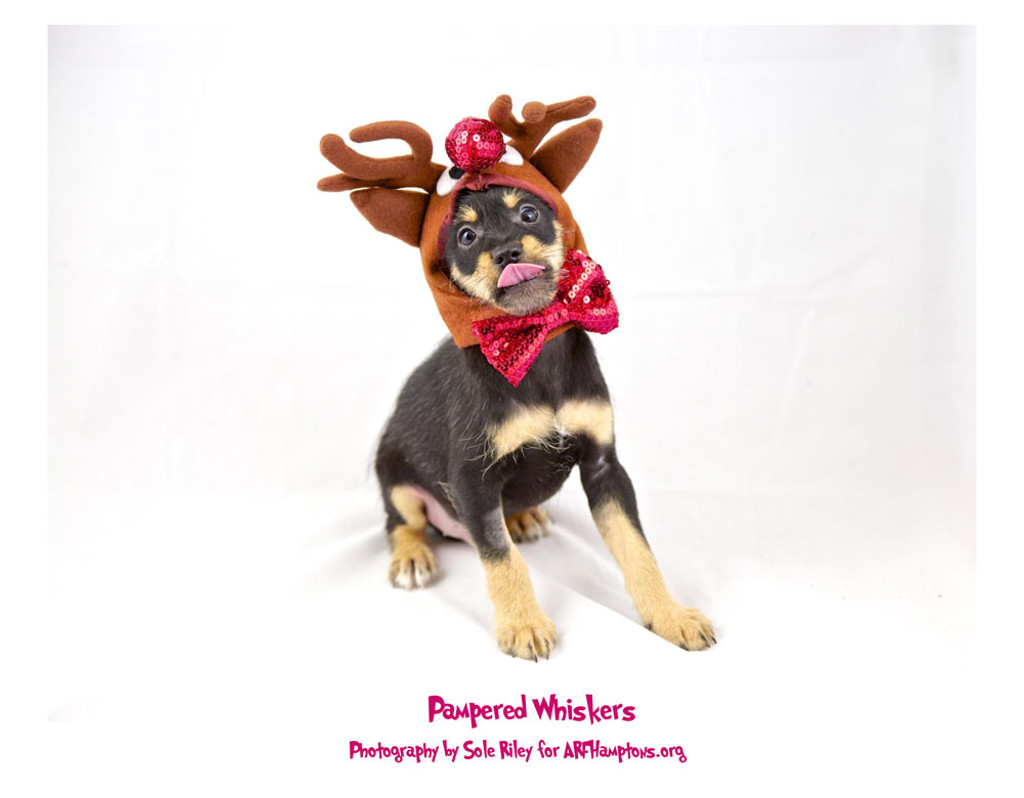Reindeer costume for dogs.