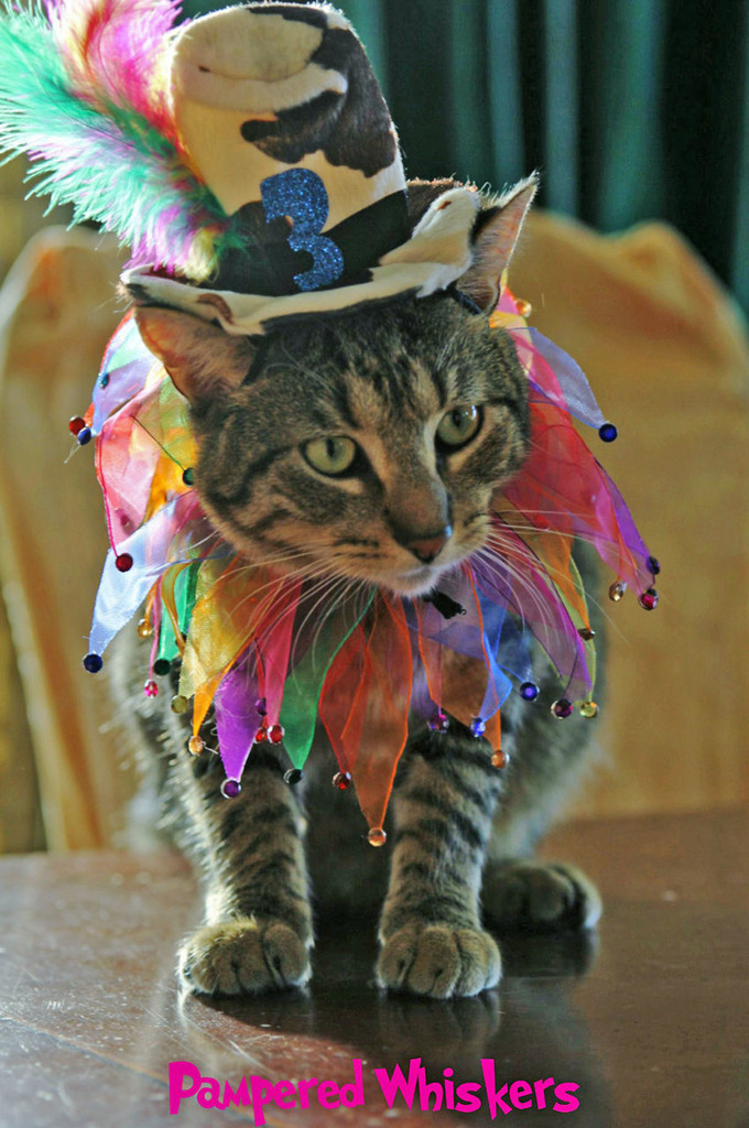 Cat Birthday hat