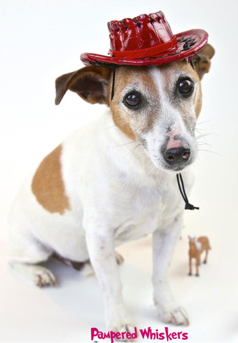 red cowboy hat for small dogs.