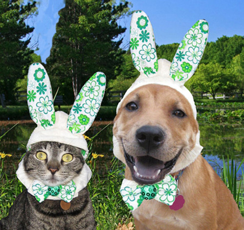 Bunny costume for dogs and cats