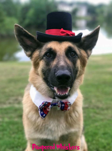 Patriotic Top Hat and Bow Tie for dogs