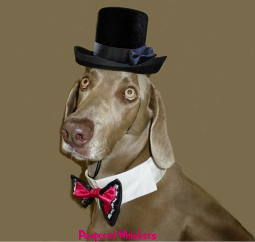 Top hat for dogs with Wild Card Bow Tie