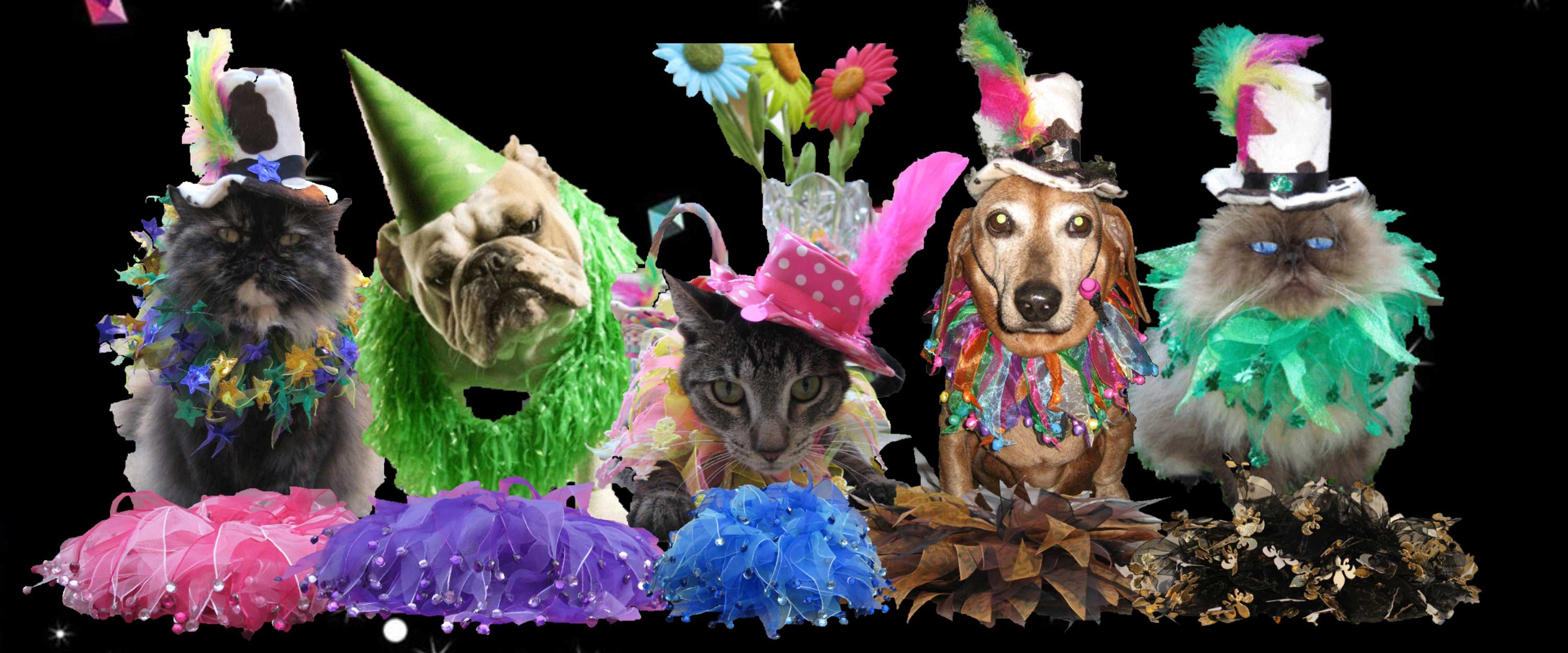 Party Collars for dogs and cats