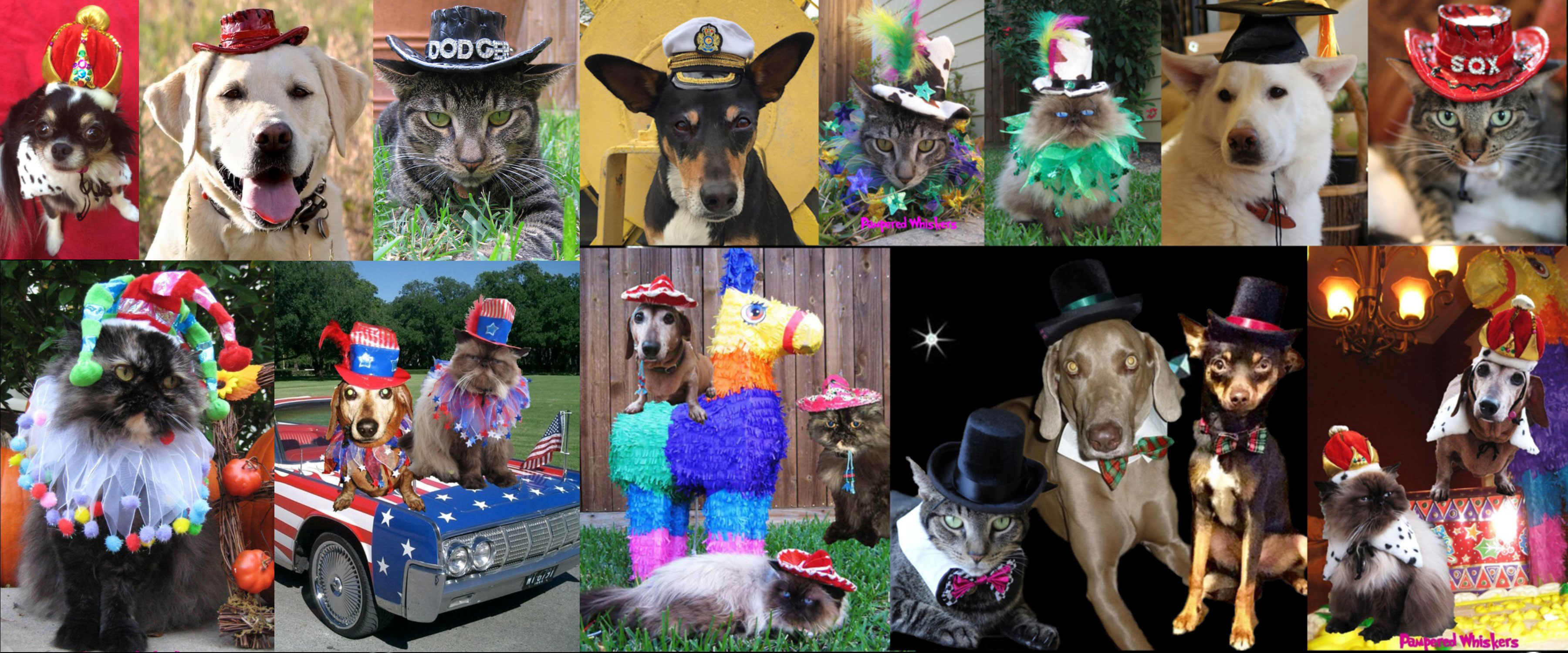 Party Hats for cats and dogs