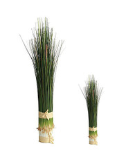 Bundled Onion Grass