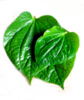 Fresh Paan Betel leaves (3.5oz)-Indian fresh herb culinaray Spice,USA