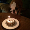 """Customized Birthday Cakes for Dogs - All Natural, Organic - Actual Size (4.5"""" round x 2.25"""" high)"""