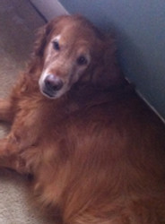 Dog years… How to care for an older pet