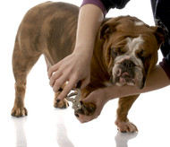 How to Safely Trim Your Pets Nails at Home