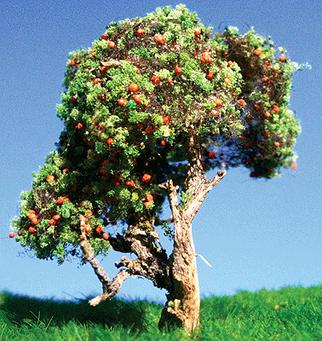 295-T22 Grand Central Gems Small Fruit Trees-Orange (3)