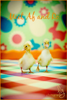 Easter Egg Theme Photography Backdrop - Item 150