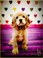 Photography Backdrop - Multi Color Grunge Hearts Photo Background - Item 1073