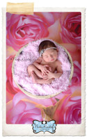 Pink Rose Photography Backdrop - Newborn Portrait Backdrop - Studio Background for Photos - Item 1313