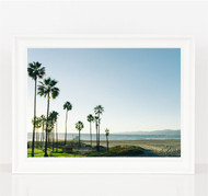 Pacific Palms