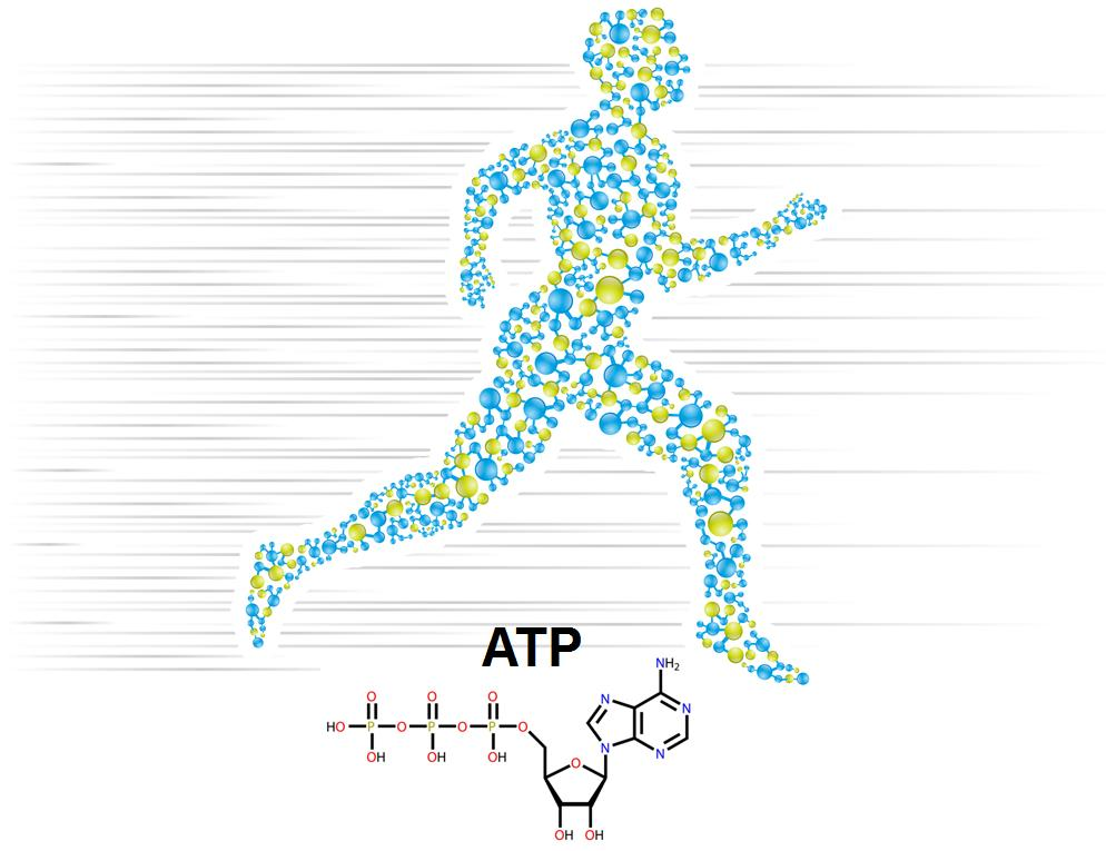An athlete running with ATP