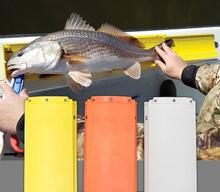 The Fish Stik White