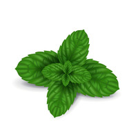 Peppermint  the crisp, clean, true peppermint scent.  Best Damn Scents