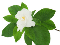 Gardenia, the exquisite aroma of tropical Gardenia. Infused with natural essential oils.  Best Damn Scents