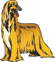Afghan Hound Dog Vinyl Sticker