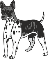 American Hairless Terrier Dog Sticker
