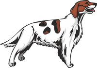 Irish Red and White Setter Dog Sticker