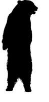 Bear Standing Decal