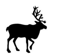 Big Buck Decal #2
