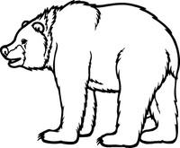 Bear Decal 1