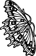 Beautiful Butterfly Decal #2