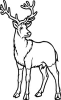 Big Buck Decal 1