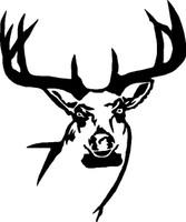 Big Buck With Rack Decal