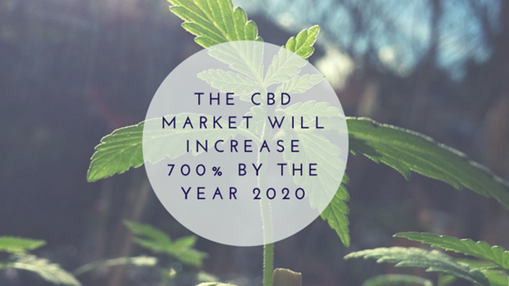 8 Ways Investing in CBD can Help Improve Health