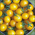 Blondkopfchen Tomato Seeds