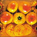 Gold Medal Heirloom Tomato