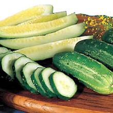 Cucumber Homemade Pickle