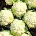 Cauliflower Snowball Y