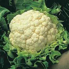 Cauliflower Candid Charm