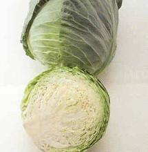 Cabbage Golden Cross