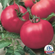 Chefs Choice Pink Tomato Seed