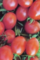 Crovarese Grape Tomato Seeds