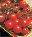 Sweetie Tomato Seeds